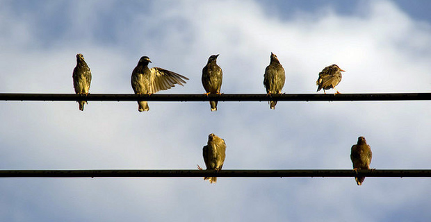 Birds on a wire. Photo credit: redpanda_ja on Flickr, http://is.gd/ezo2u